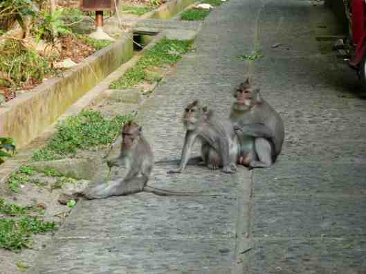 Very orderly monkeys